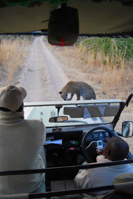 fundi-leopard-car-bobby-rickell