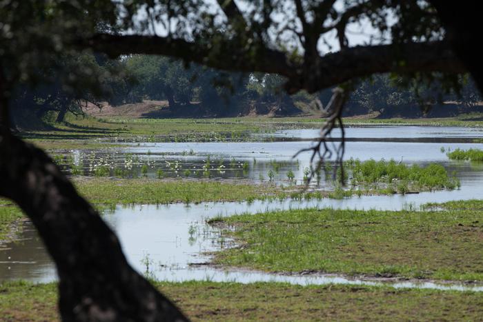 green-lagoon-luangwa
