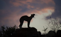 leopard-rock-samburu