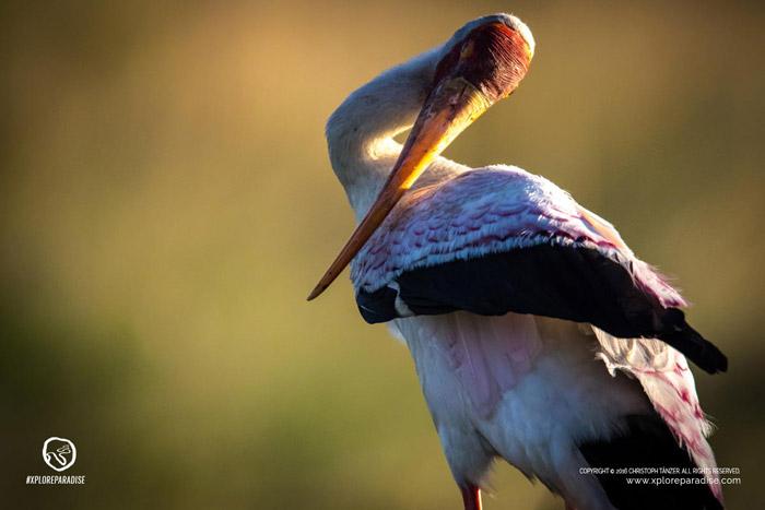 okavango-delta-birds