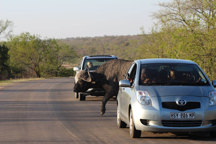 self-drive-buffalo