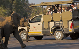 vehicle-and-young-elephant-outlook-safaris