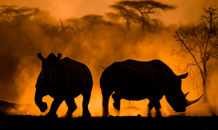 wildlife-photography-birds-rhinos