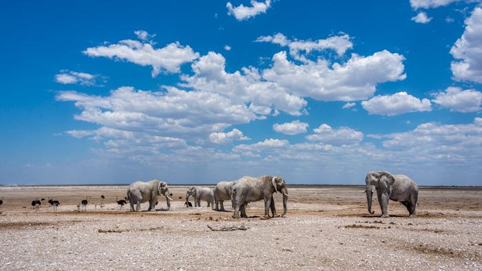 wildlife-photography-elephants-etosha