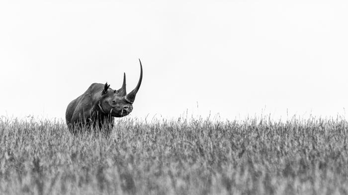 wildlife-photography-rhinos