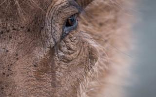 wildlife-photography-warthog