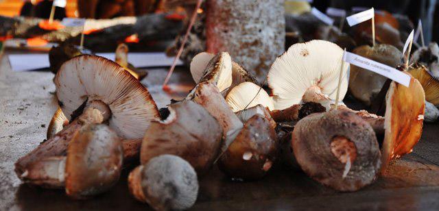 Delheim-Mushroom-Hunt-Stellenbosch
