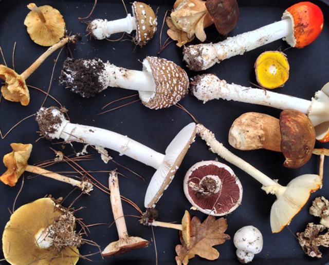 Delheim-Mushrooms