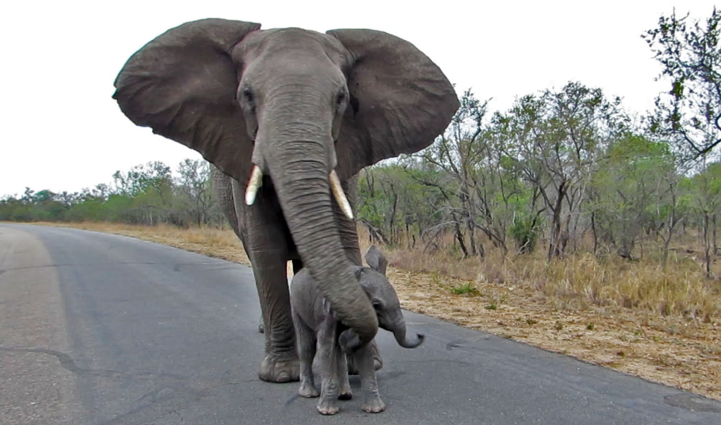 Elephants Animal Animals Calf: Video: Mother Elephant Teaches Baby Not To Talk To