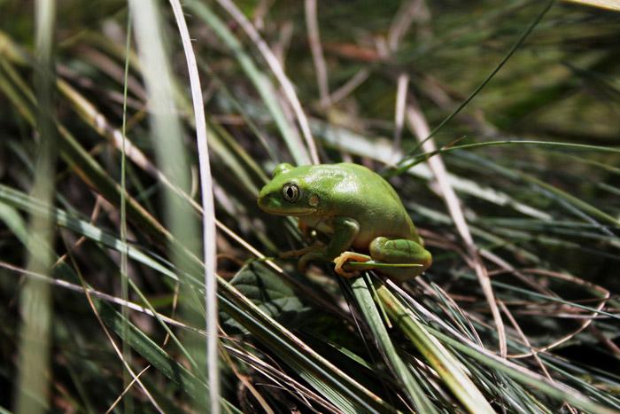 ©Steve McKean/KZN Ezemvelo Wildlife