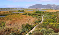 Rondevlei Wetlands Nature Reserve, Cape Town, South Africa ©Abu Shawka