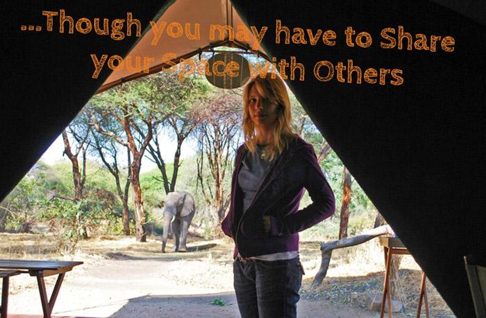 Ruaha-accommodation-elephant