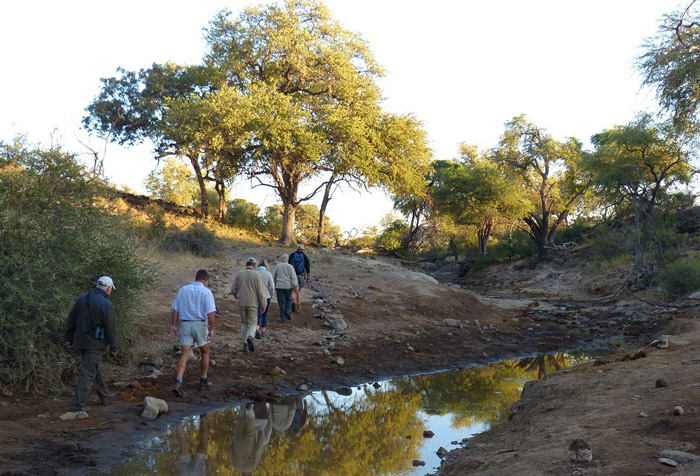 Tuli-Safari-Lodge-bush-walk