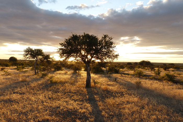 Tuli-Safari-Lodge-landscape