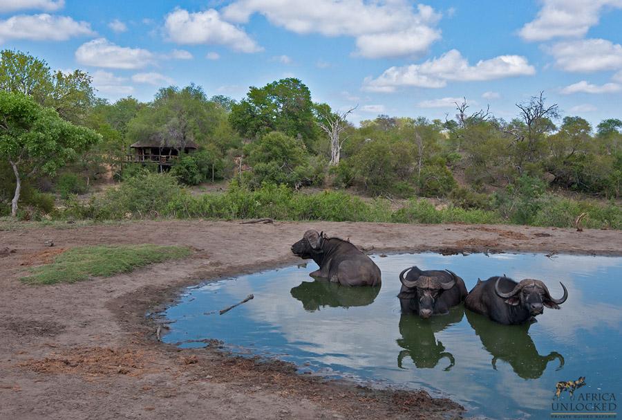 Umlani-water-hole