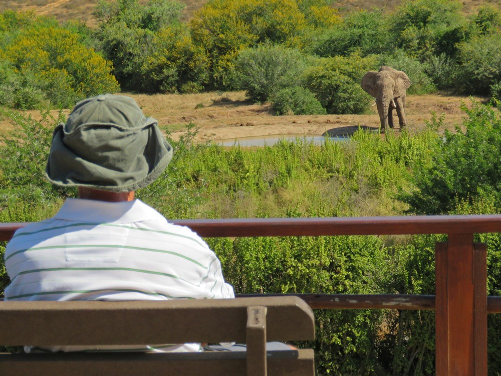 addo-elephant-camp-janine-avery