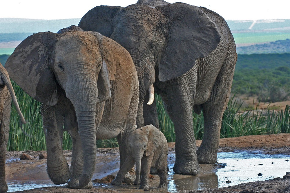 addo-elephants-three-generations-janine-avery
