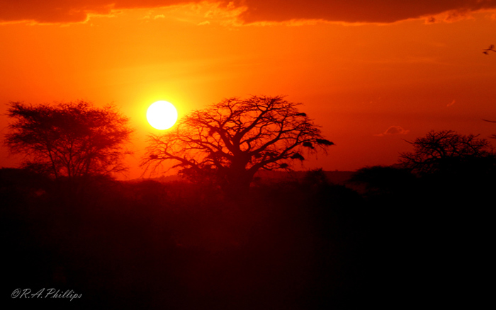 Baobab at sunset in Ruaha ©Rebecca Phillips