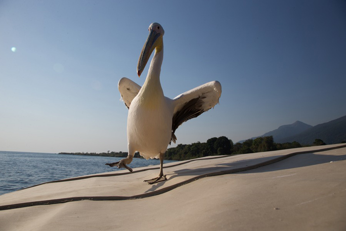 big-bird-on-the-beach