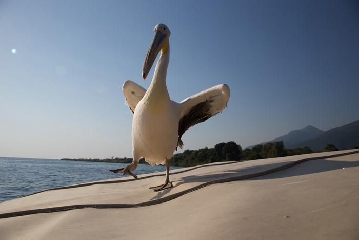 big-bird-on-the-beach