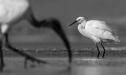 birding-photography