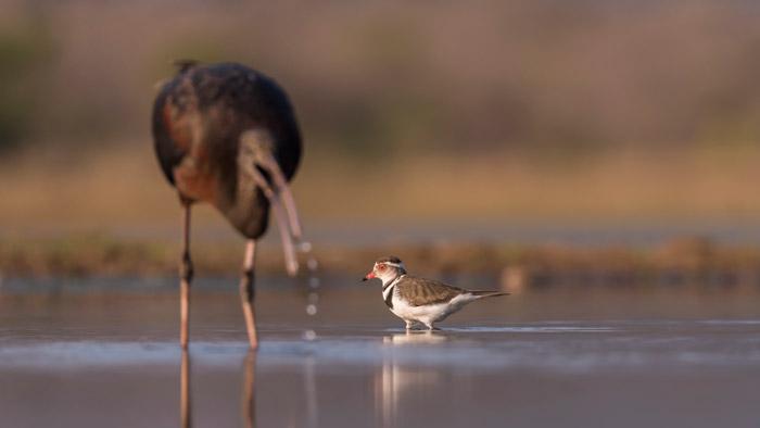 birds-photography