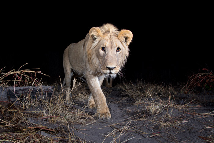 ©Will Burrard-Lucas/WWF-US