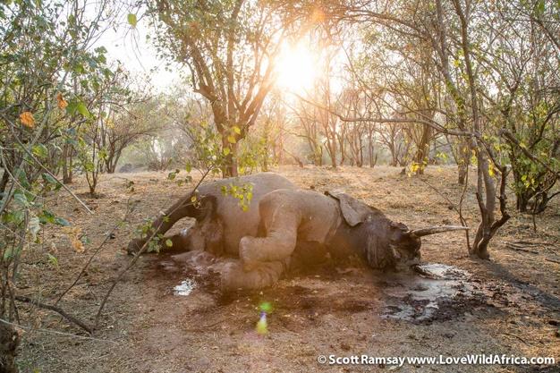 Mana Pools National Park in Zimbabwe