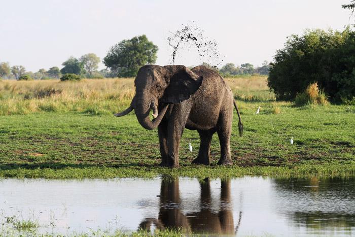 elephant-delta-botswana