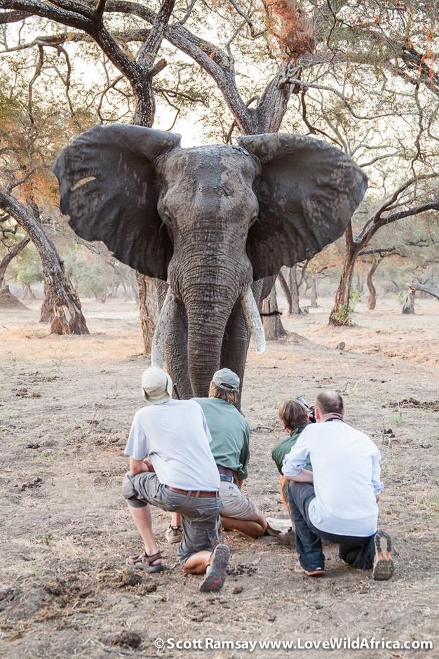 elephant-mana-pools-zimbabwe