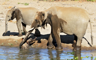 elephant-mum-helps-calf-out-of-water