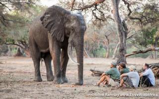 elephants-mana-pools
