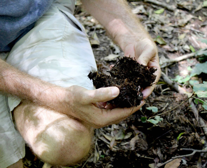 examining-fresh-dung from Knysna elephants