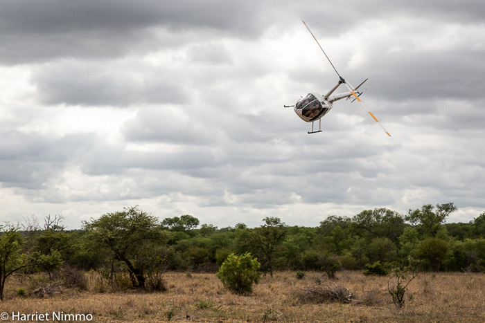 helicopter-elephant-rescue