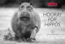 hooray-for-hippos-issue-85pop