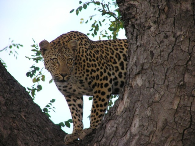 leopard-destinations-africa