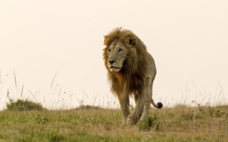 Six lions have escaped from the Nairobi National Park ©Nation Media Group