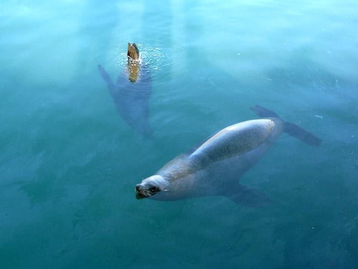 Seals in Hout Bay ©Damien du Toit