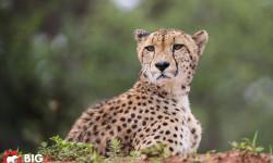Kalahari-photos-safari