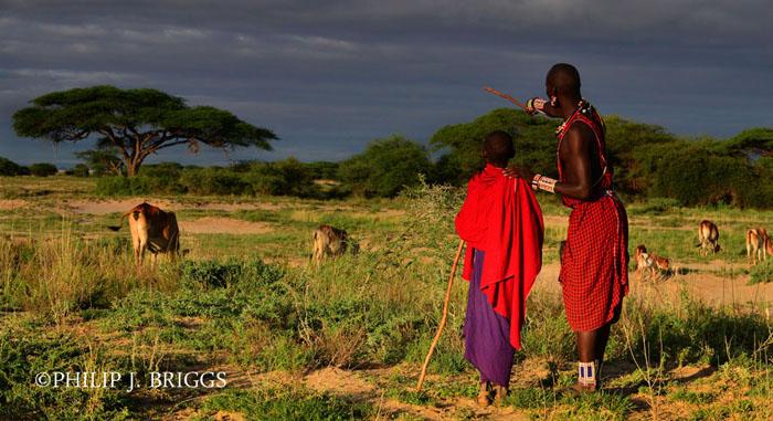 The Maasai Cultural Breakdown Paper