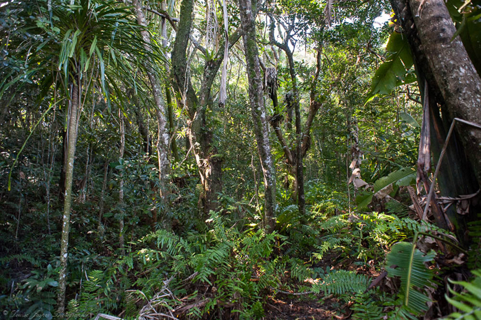 Madagascan-jungle
