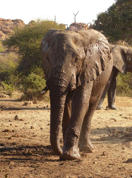 Muddy-elephant