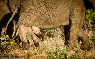 Rescued-baby-elephant
