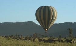 Serengeti-by-hot-air-balloon
