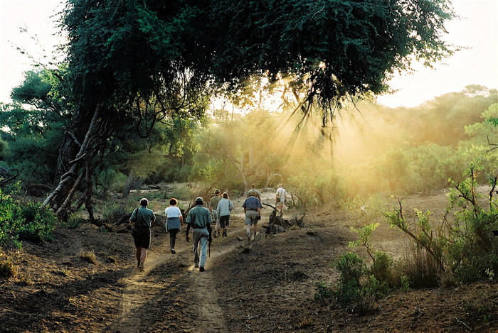 Tuli-safari-walk