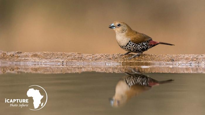 bird-photograph