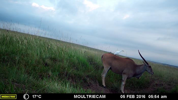 buck-on-camera