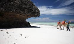 camel-diani-beach