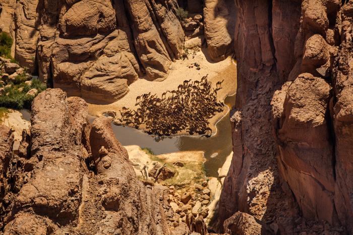 camels-amongst-rocks