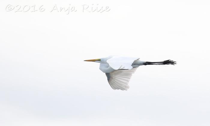 capturing-birds-in-flight